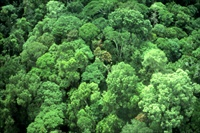 Brazil Amazon rainforest canopy