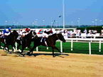 Dubai horse racing - stylish places to stay